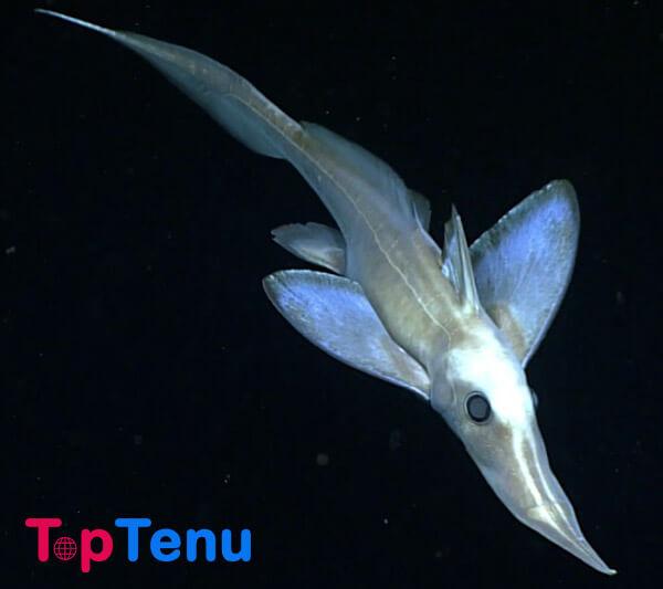 Transparent Fish, Top 10 Transparent Fish in the World