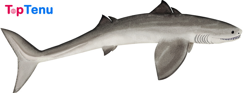 Prehistoric Sharks, Top 10 Strangest Prehistoric Sharks That Ever Lived