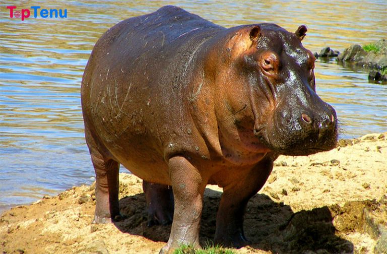 Top 18 Most Famous Animals in the World