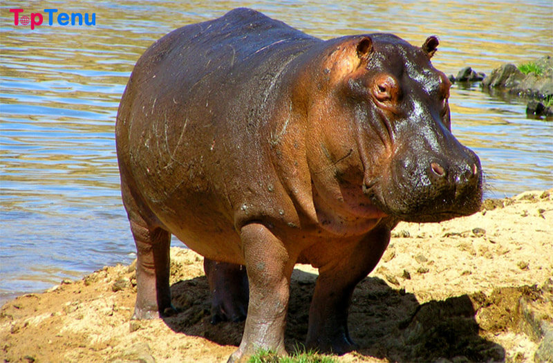 Famous Animals, Top 18 Most Famous Animals in the World