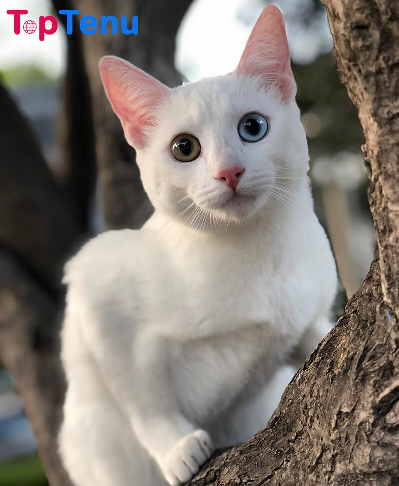 weird cat breeds, Top 15 Most Weird Cat Breeds in The World
