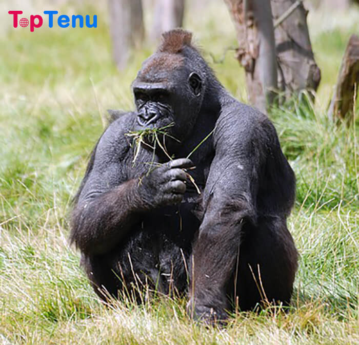 Animals that are on the Verge of Extinction, Top 10 Animals that are on the Verge of Extinction