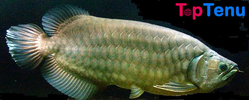 Expensive Fish, Top 10 Most Expensive Fish in the World