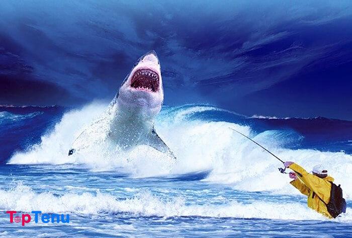 Reasons Why Sharks are Misunderstood, 12 Reasons Why Sharks are Misunderstood