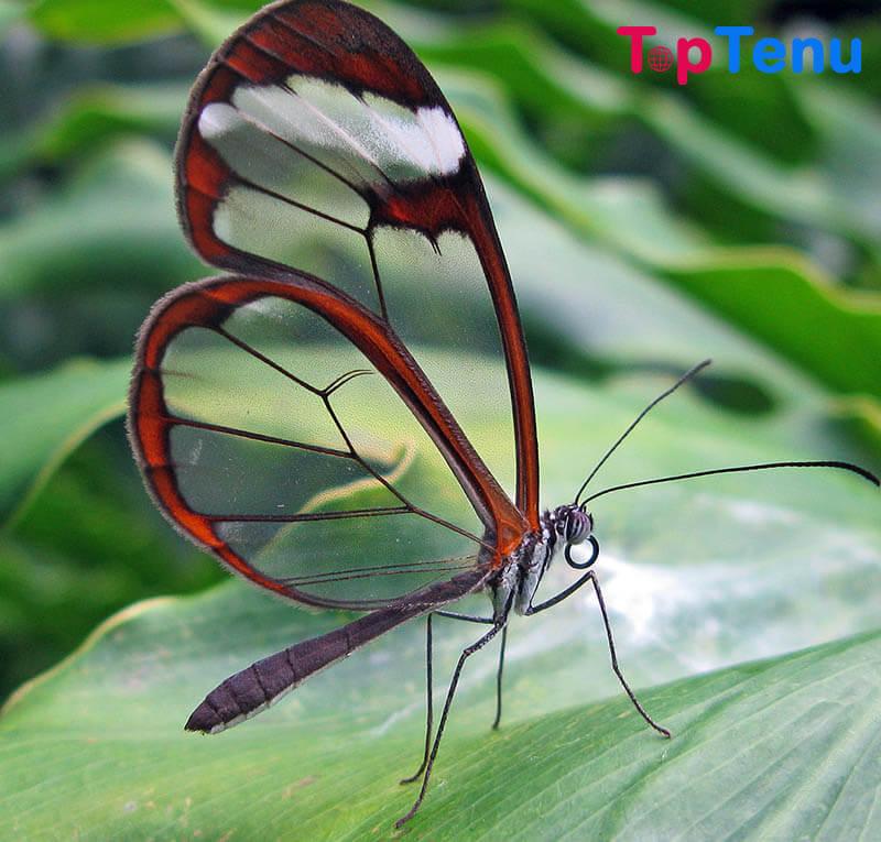 Transparent Animals, Top 10 Transparent Animals in the World