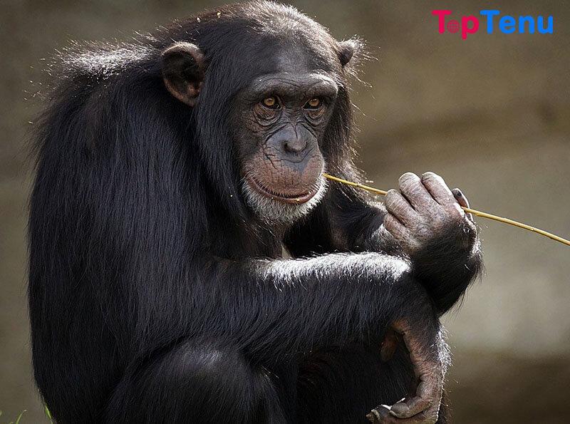 Most Intelligent Animals, Top 10 Most Intelligent Animals in the World