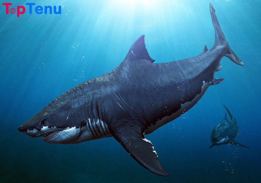 Largest Sea Creatures, Top 15 Largest Sea Creatures in the World