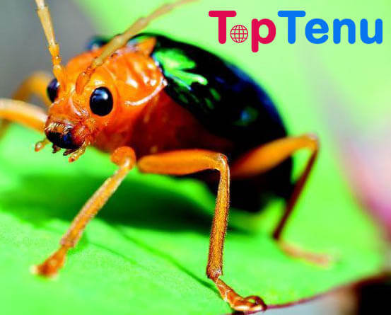 Weird Animal Defense Mechanisms, Top 10 Weird Animal Defense Mechanisms