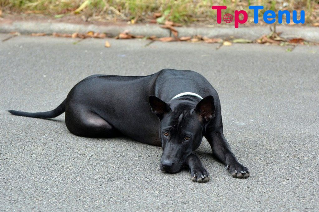 Expensive Dogs, Top 10 Most Expensive Dogs in the World 2021