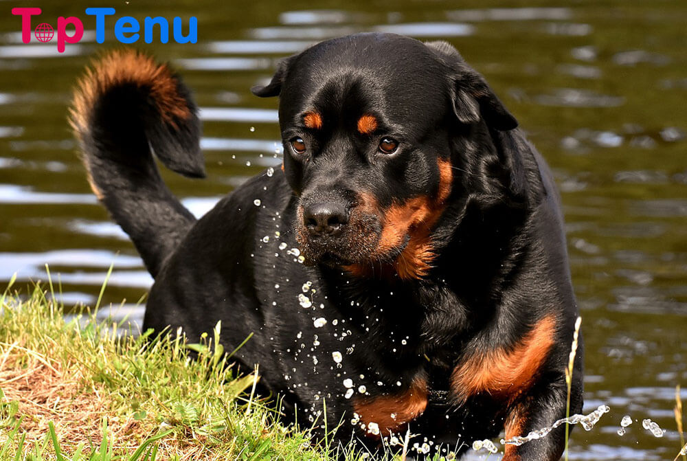 most dangerous dog breeds, Top 10 Most Dangerous Dog Breeds in the World
