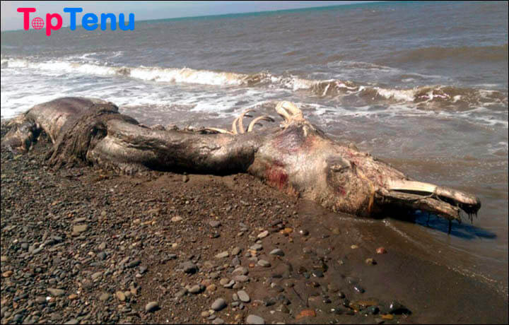 Bizarre Animal Carcasses, Top 10 Bizarre Animal Carcasses That Washed Ashore