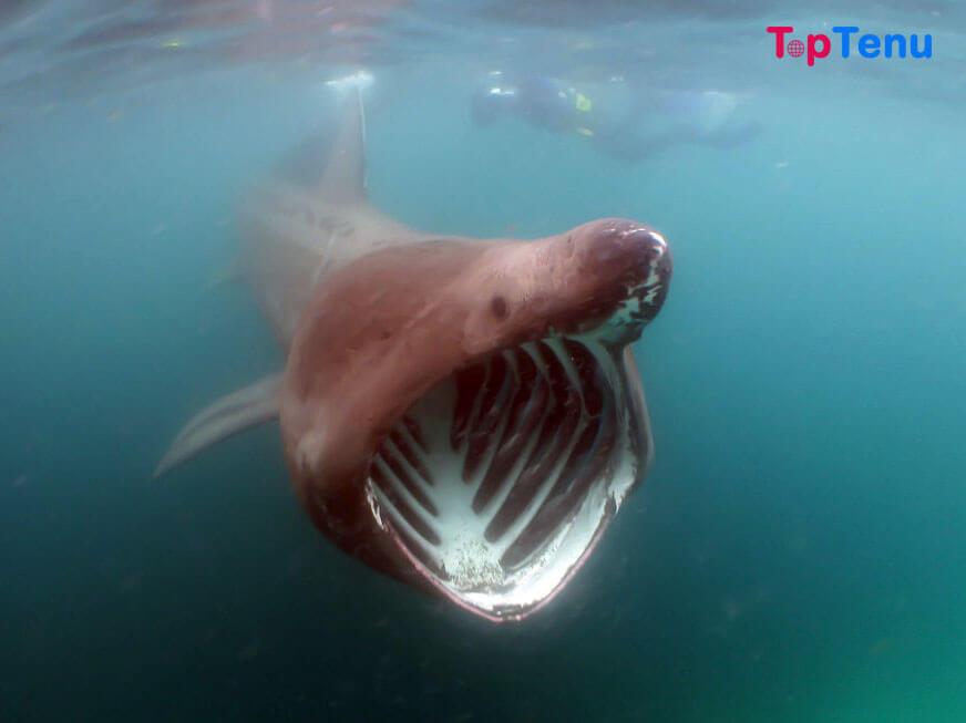 Massive Deadliest Creatures, 10 Massive Deadliest Creatures You'll Find in the Ocean