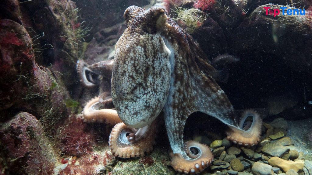 Sociable Sea Creatures, 7 Most Sociable Sea Creatures in the World