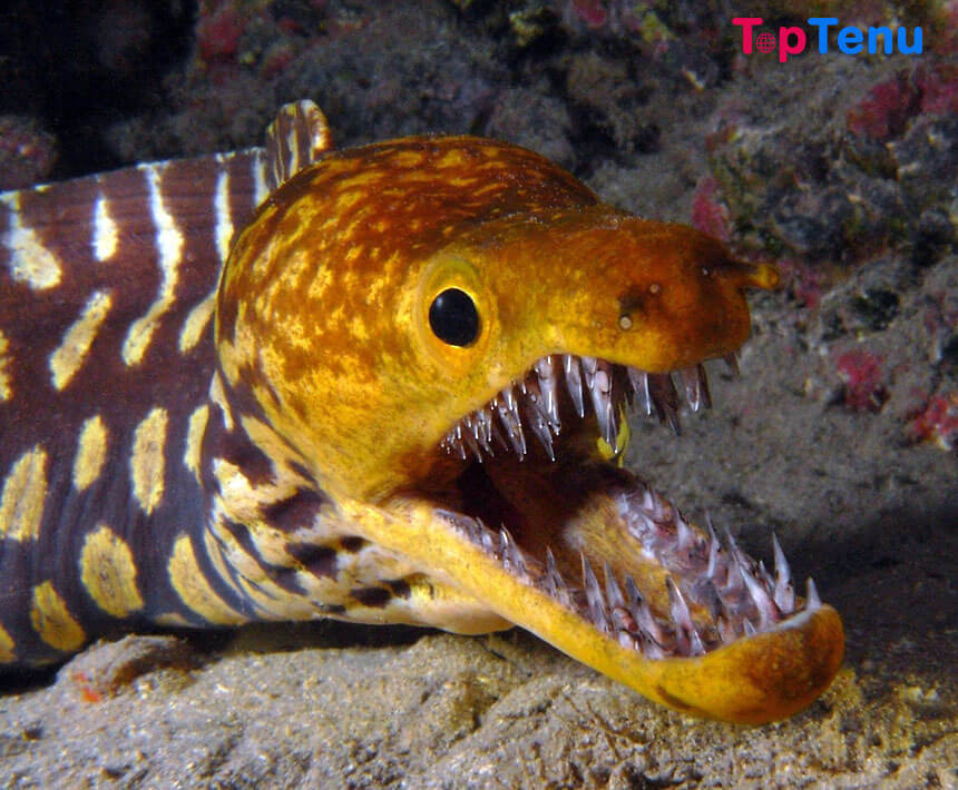 Scary Sea Creatures, 10 Scary Sea Creatures in the World
