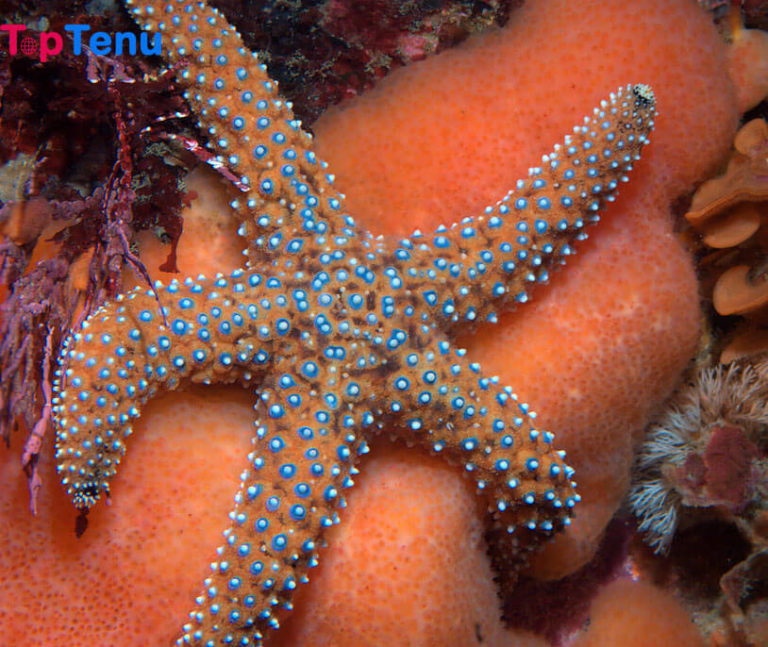 Top 10 Colossal Sea Creatures in the World