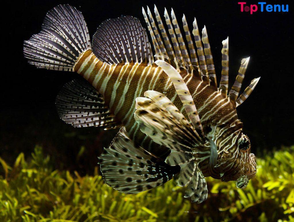 Deadly Sea Creatures, Top 12 Most Adorable But Deadly Sea Creatures