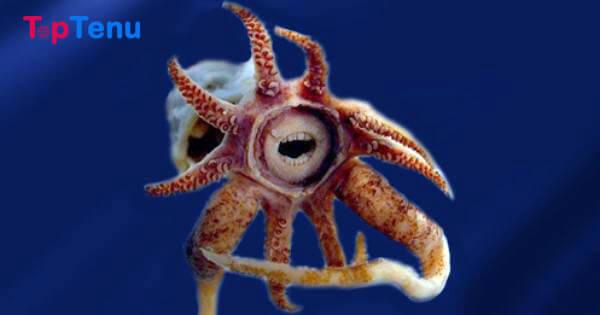 20 Rarest and Most Unusual Sea Creatures