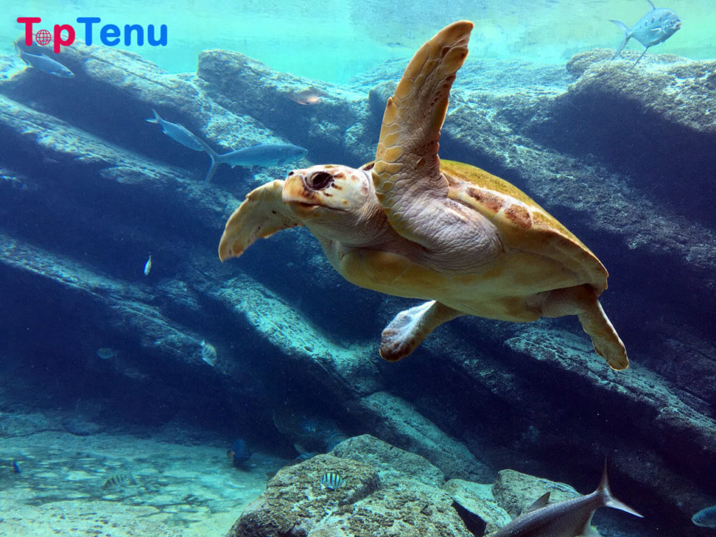 Friendliest Sea Creatures, Top 3 Friendliest Sea Creatures in the World