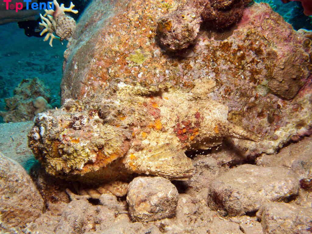 Poisonous Creatures, 14 Most Poisonous Creatures of the Sea