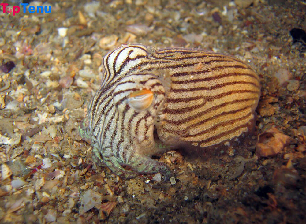 Brainiacs of the Sea, 10 Animals that are Brainiacs of the Sea