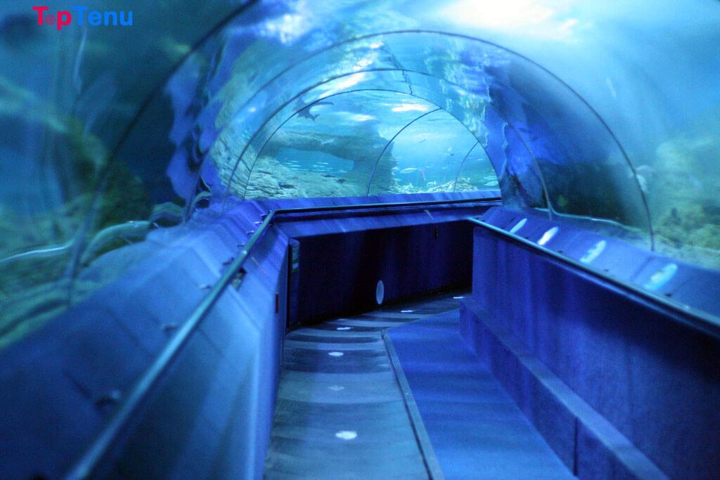 Best Aquarium in the World, Top 12 Best Aquarium in the World