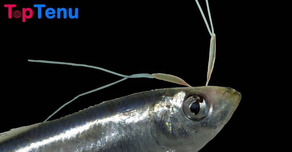 Worst Parasites, Top 11 Worst Parasites in the Water