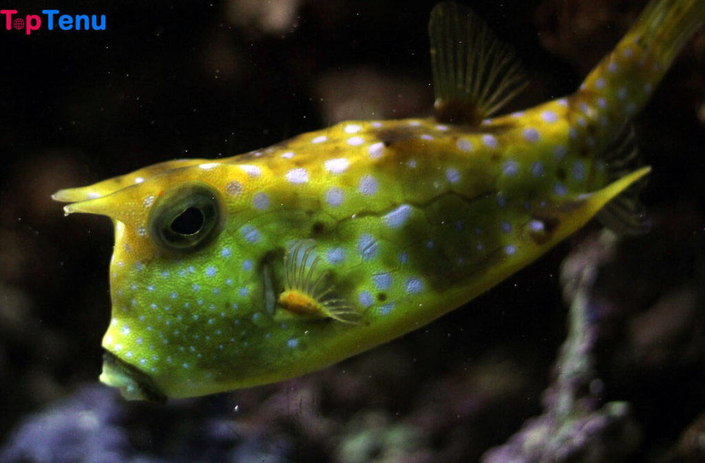 POISONOUS Fish, Top 10 Most Poisonous Fish in the World