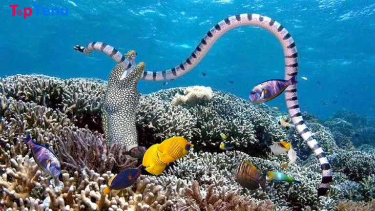 10 Differences Between Eels and Sea Snakes