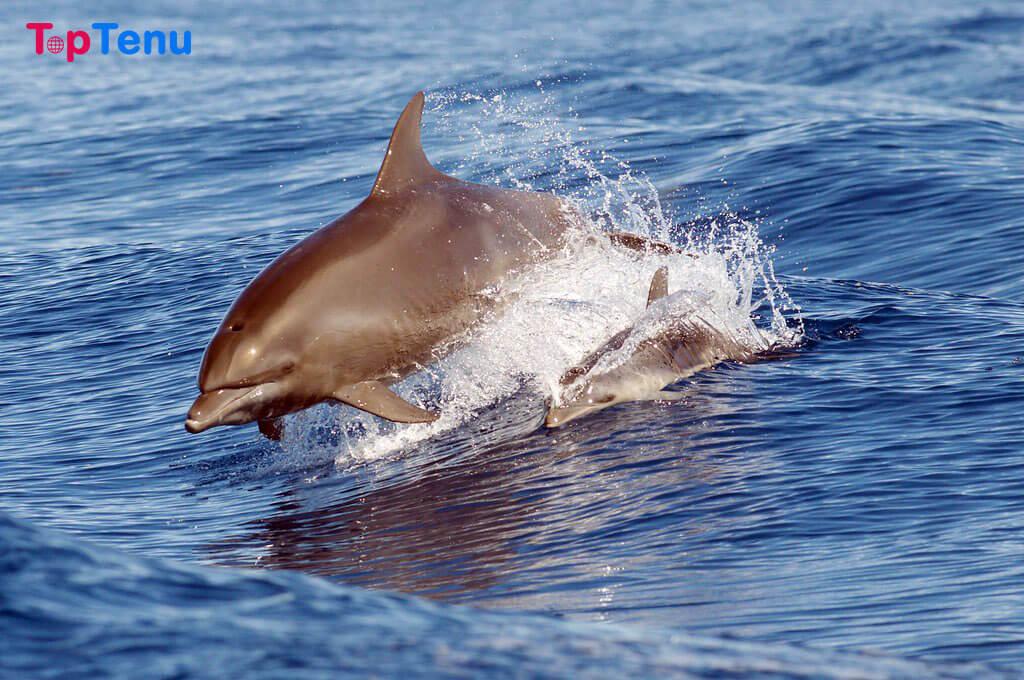 Cutest Sea Creatures, Top 13 Cutest Sea Creatures in the World