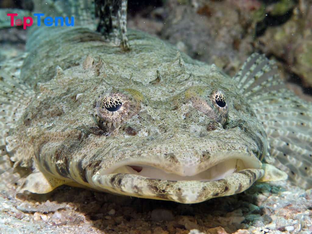 Camouflaged Sea Creatures, 8 Best Camouflaged Sea Creatures in the World