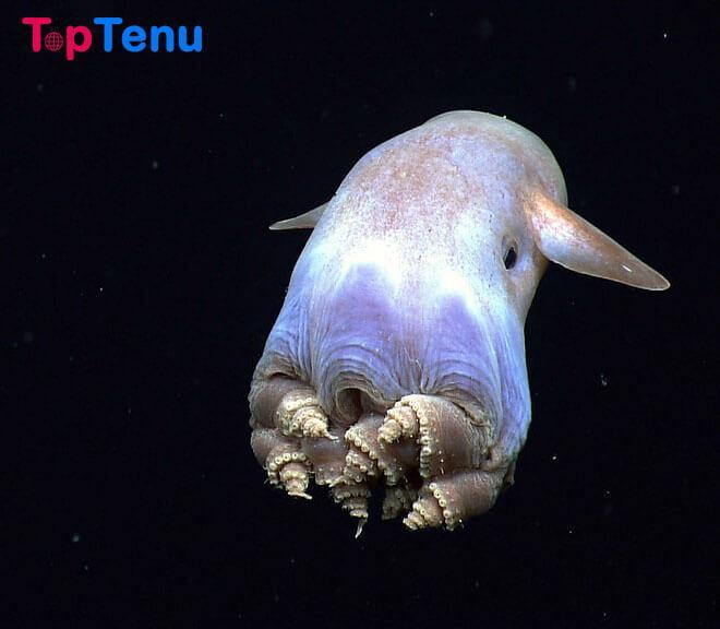 Rarest Sea Creatures, 7 Rarest Sea Creatures in the World