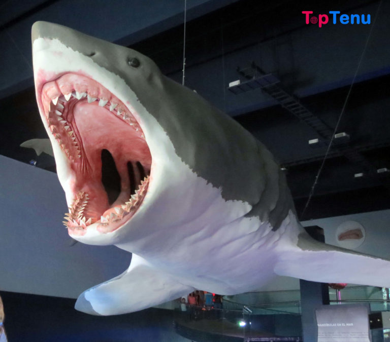 9 Horrifying Facts about the Megalodon