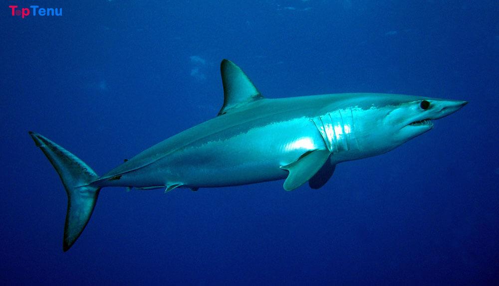 Fastest Swimming Sea Creatures, 8 Fastest Swimming Sea Creatures