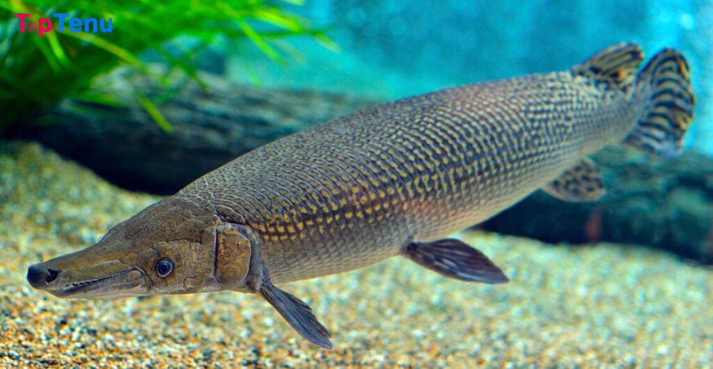 , Top 10 Largest Freshwater Creatures in the World