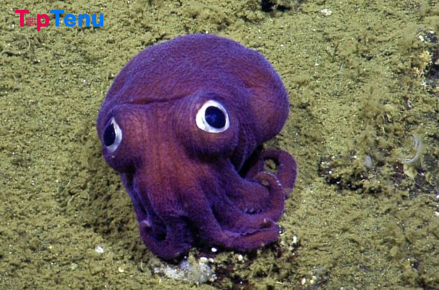 Colossal Creatures, 10 Colossal Creatures of the Deep Sea