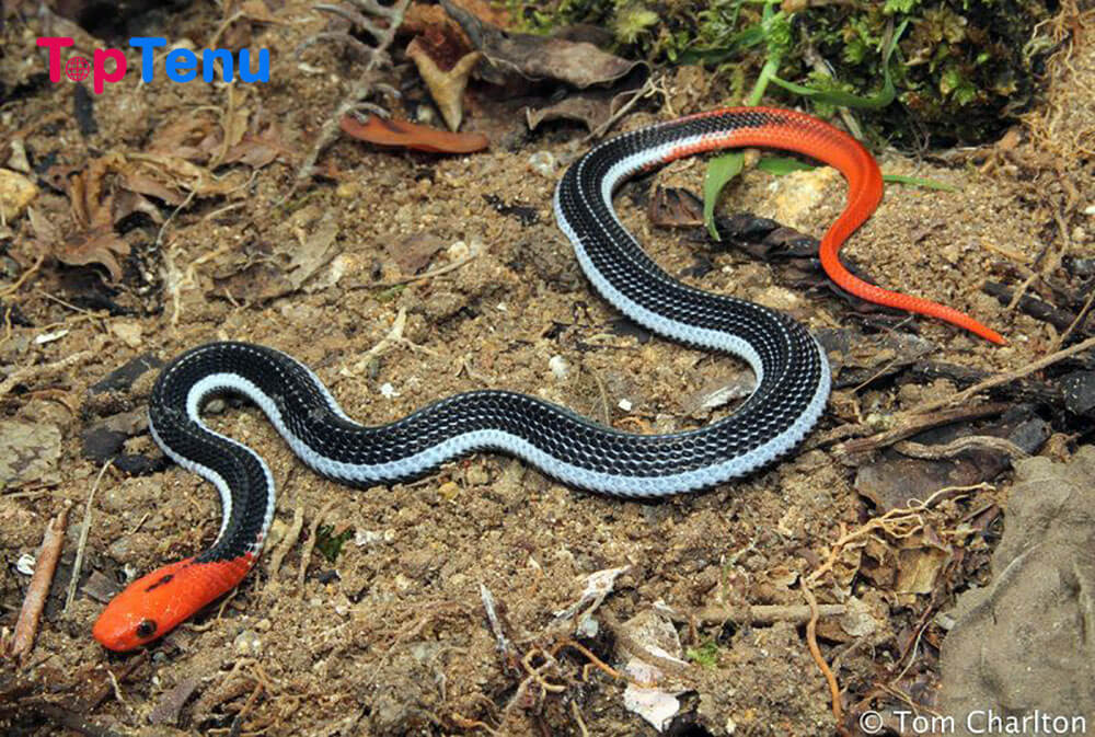 Beautiful Snakes, Top 10 Most Beautiful Snakes in the World